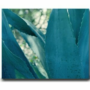 Large Agave Wall Art | Succulent Art Decor | Nature Photography Wall Art