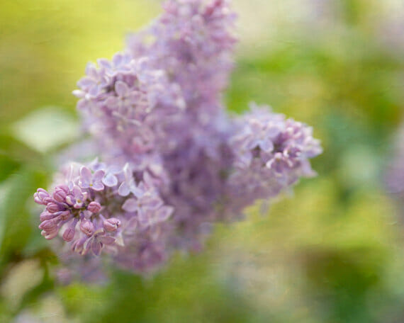 Waves of Serenity | Fine Art Photos with Shades of Lavender