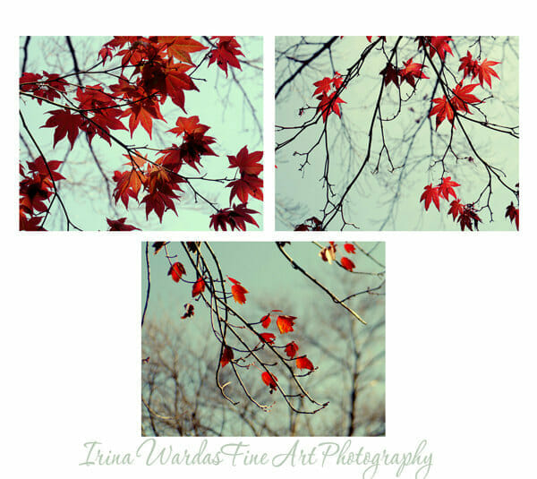 Autumn Maple Tree Leaves Wall Art | 3 Piece Set | Red Nature Wall Decor