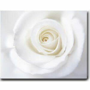White Rose Modern Wall Decor | Large Floral Canvas Wall Art