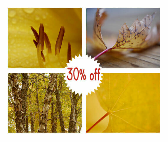 Mustard Yellow Nature Wall Art | Brown Amber Tree and Leaf Wall Art