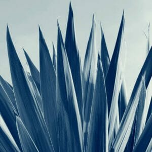 Cordyline Botanical Wall Art