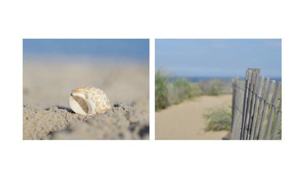 Beach Wall Decor   Coastal Wall Art   Beach Dunes   Seashell Wall Art