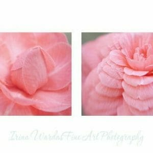 Camellia Wall Art Set of 2