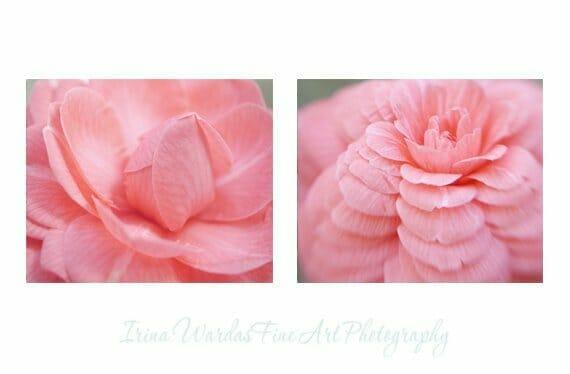 Camellia Wall Art Set of 2
