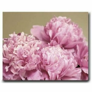 Peony Canvas Wall Art | Shabby Chic | Pink Floral Canvas Wall Decor