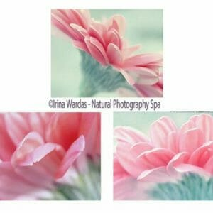 Gerbera Daisy Wall Art Set of 3