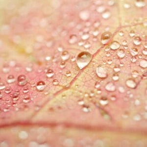 Leaf with Dew Drops Wall Art