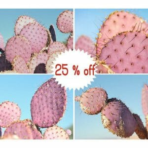 Pink Cactus Wall Art | 4 Piece Set | Prickly Pear Cactus Wall Art Decor