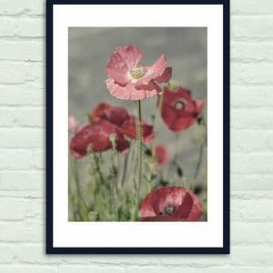 Red Poppy Flower Wall Art