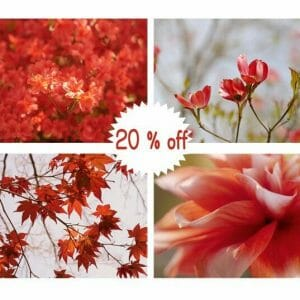 Red Leaf Wall Art | Burt Orange Botanical Wall Decor | 4 Piece Set