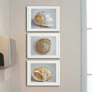 3 piece seashell wall art