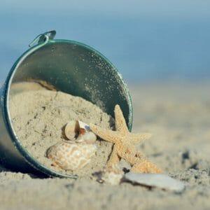 Seashells Coastal Beach Wall Art