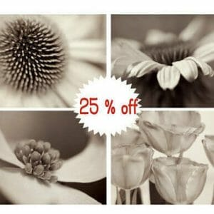Brown Tan Sepia | Floral Wall Art | Black and White Botanical Wall Decor