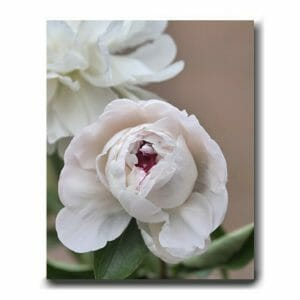 Shabby Chic Wall Decor | Peony Floral Artwork | Girl Room Wall Decor