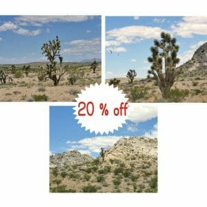 Southwestern Wall Art | Joshua Tree Prints | California Desert Wall Decor