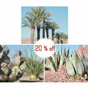 Southwest Desert Wall Art Set of 3