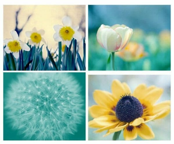4 Piece Flower Wall Art Set | Turquoise Teal Yellow Floral Wall Art Set of 4