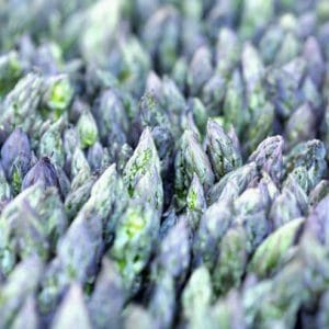 Vegetable Photography Print | Asparagus Wall Art | Green Purple Wall Art