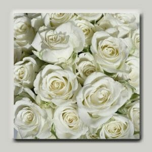 White Roses Wall Art   Shabby Chic Wall Art   Country Cottage Wall Decor