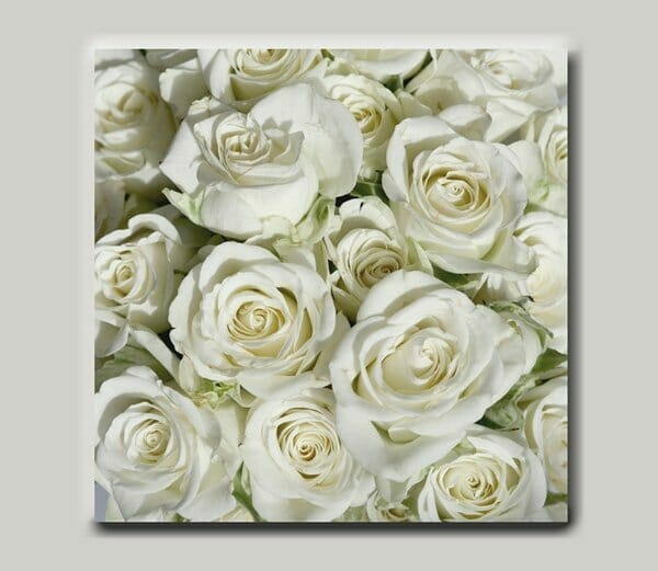 White Roses Wall Art | Shabby Chic Wall Art | Country Cottage Wall Decor