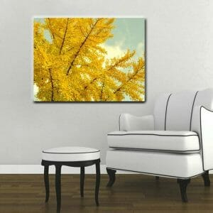 yellow ginkgo biloba tree wall art