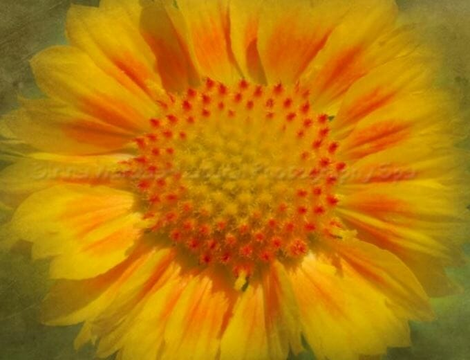 Mandala Flower Pictures for Your Photo Meditation Time