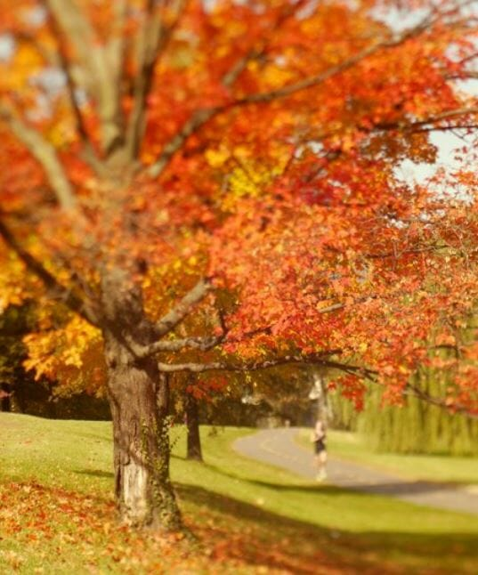 Healing Photos of Autumn Sunlight to Brighten Your Day