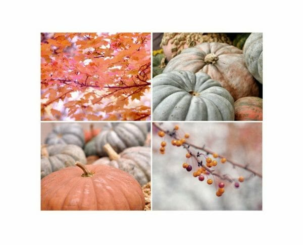 Fall Pumpkins and Leaves Photography | Rustic Wall Art Set of 4