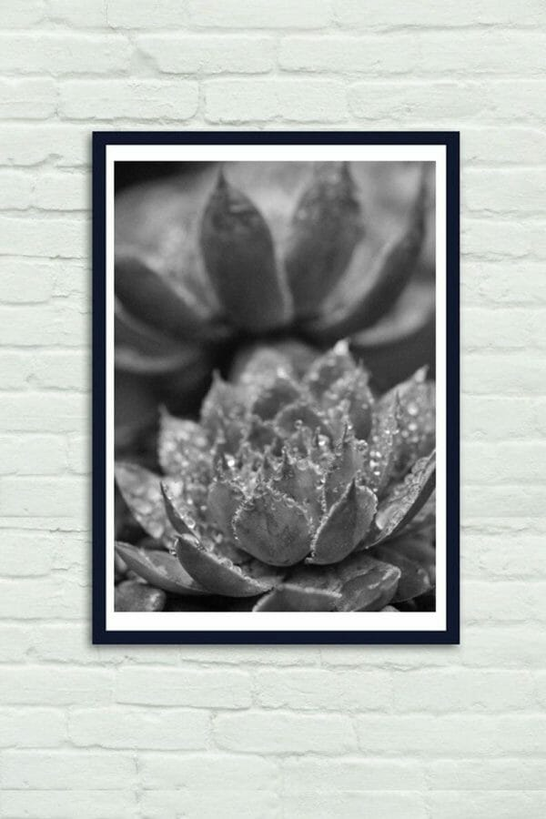 Black and White Succulent Photography   Rain Water Drops   Vertical Wall Decor