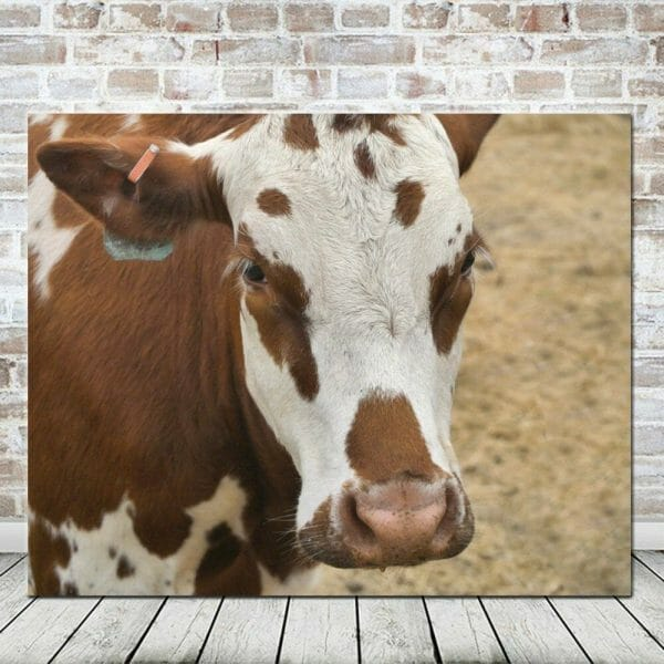 Large Rustic Print or Canvas | Farm Animal Picture | Brown White Yellow Cow