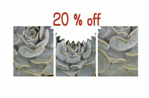 Succulent Photography   Grey Wall Art Set of 3   Prints or Canvas